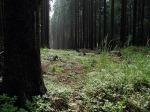 forest-572505_640