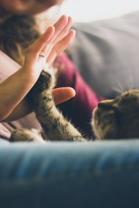 Woman's hand touching cat's paw