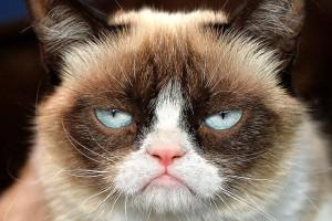 grumpy-cat-300x200