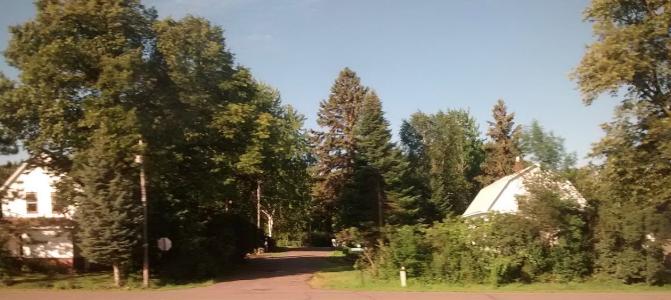 trees, Minnesota, small town