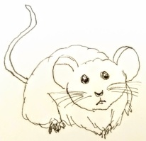 cute mouse, drawing of mouse