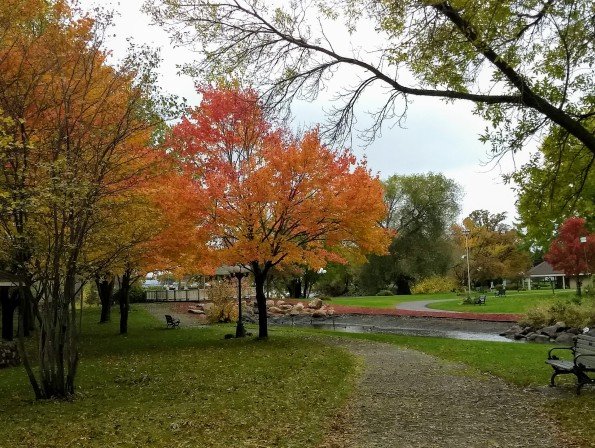 park maples