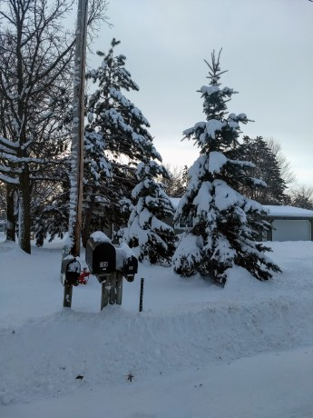 pine trees covered in snow with mailboxes in front