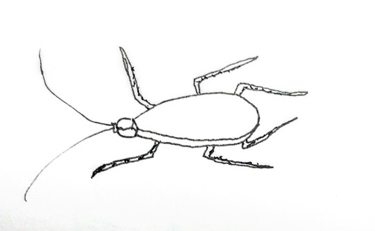 cockroach german