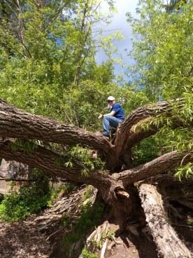 Husband up a tree
