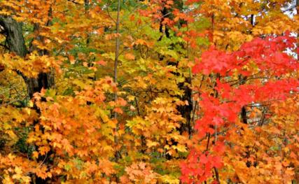 autumn other