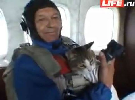 cat diving