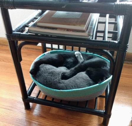 cats sleeping 2