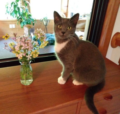 Lady grey with flowers