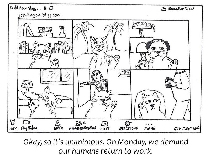 comic drawing of cats on Zoom