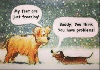 dogs snow joke